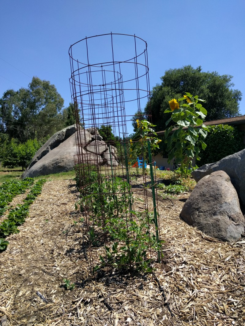 Large Of Texas Tomato Cages