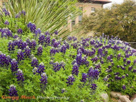 20130316_Univ_of_Texas_Campus_065