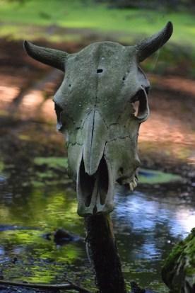 skull-937131_960_720