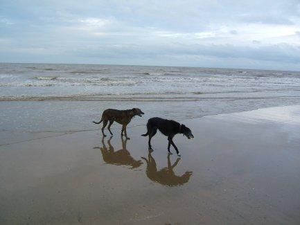 auburndogs