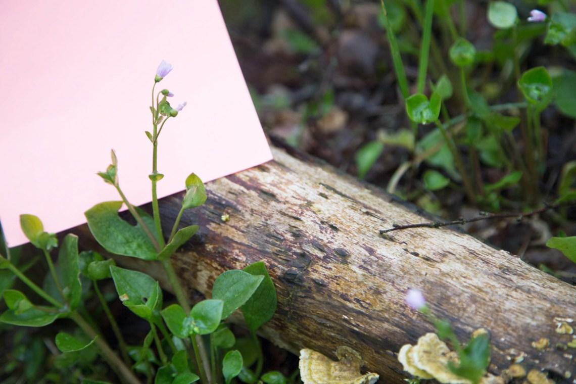 postelein - groene avonturenkopie