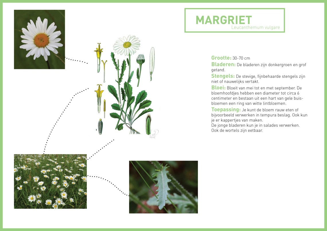 margriet - groene avonturen