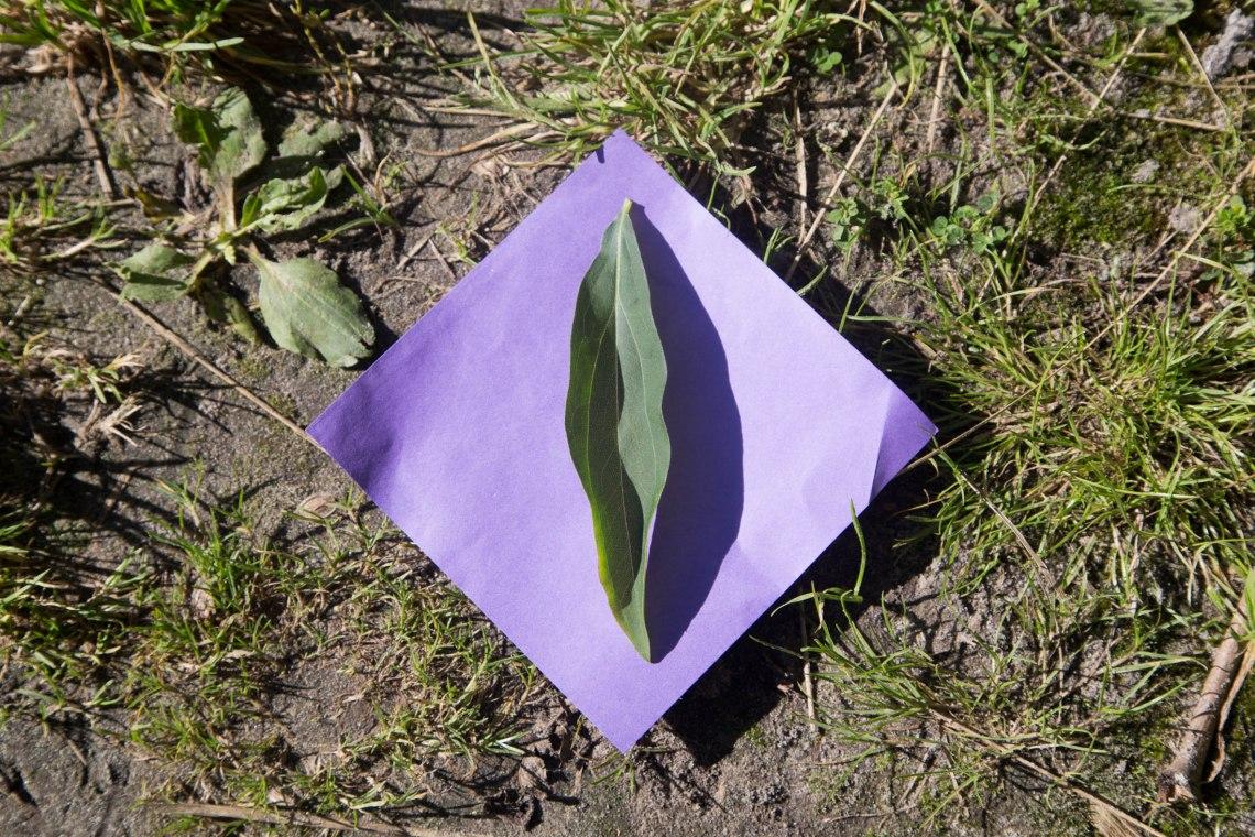 wildplukken-canadese-gulden-roede-groene-avonturen-3