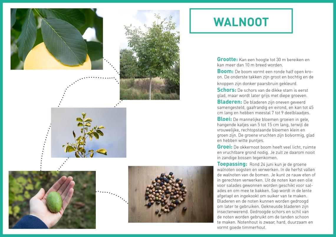 walnoten-groene-avonturen