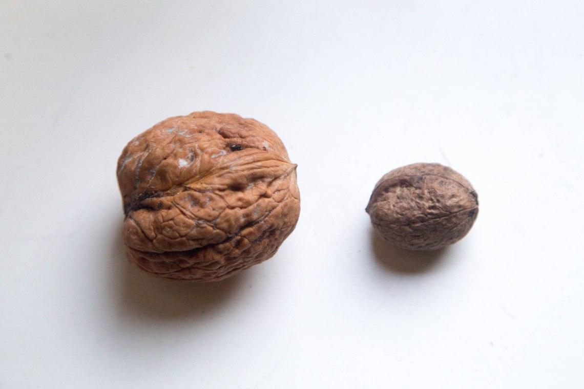 wildpluk-woensdag-walnoten-groene-avonturen