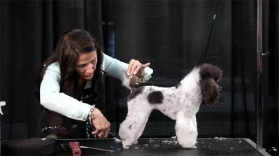 zecco-poodle-demo1