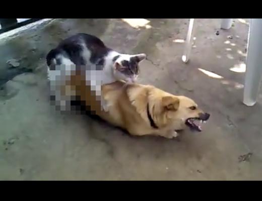 【異種姦】オラオラ系の猫に犬が犯される一部始終www 動画有り