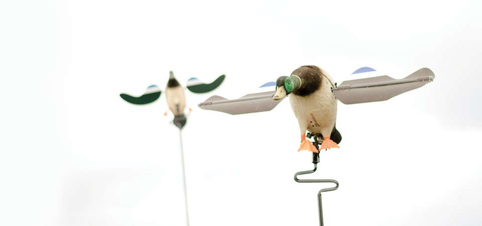 slider-waterfowl