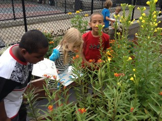 PS 29 Brooklyn food and pollinator garden