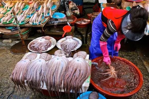 jalgachi market, octopus seller, busan tourism, travel busan, busan bridge