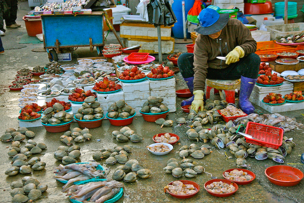 jalgachi market, clam seller, busan tourism, travel busan, busan bridge