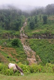 horse-sapa-valley