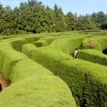 Photo Essay: Lost in Jeju Island&#8217;s Gimnyeong Maze Park