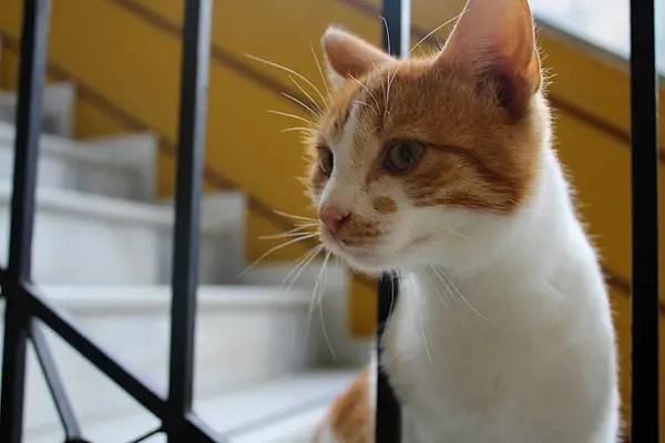 greek cat, cats in greece