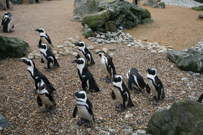 penguin in patagonia