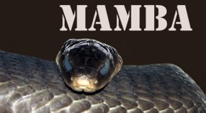 Black Mamba E-Liquid Review
