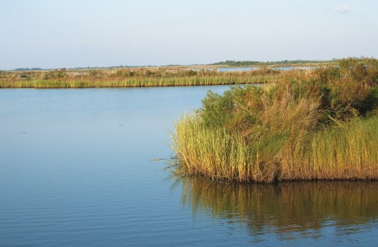 Washington Post:  U.S. Loss of Ecologically-Sensitive Wetlands Staggering