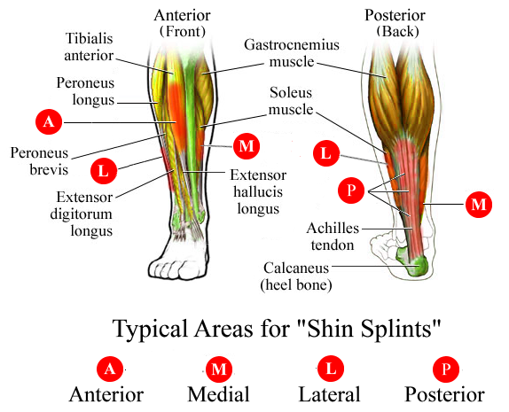 image of Left Outer Ankle Medical Term 01