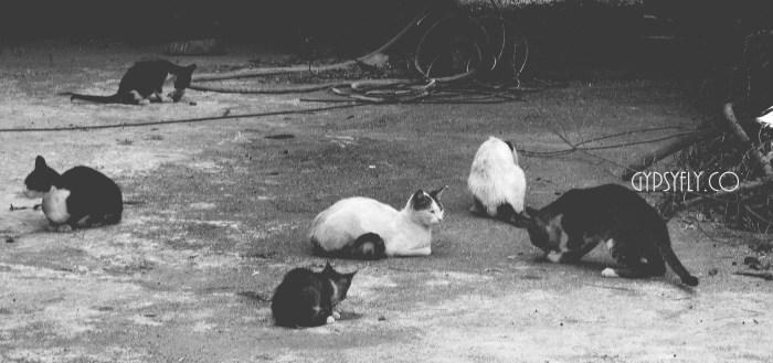 Cats, Morocco