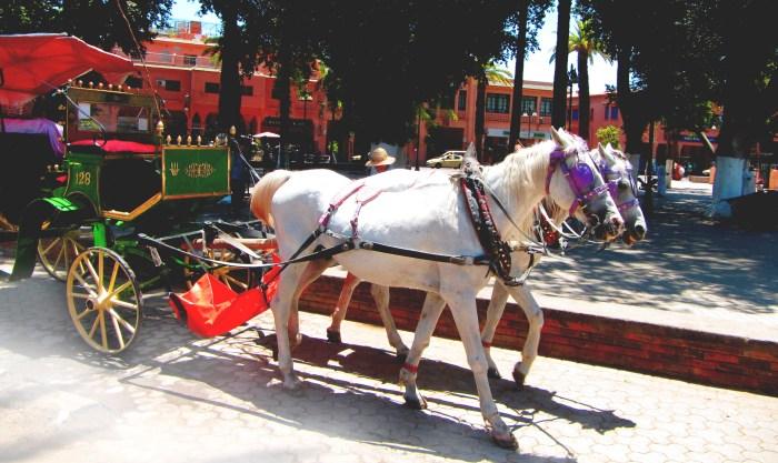My Ride, Marrakech Medina