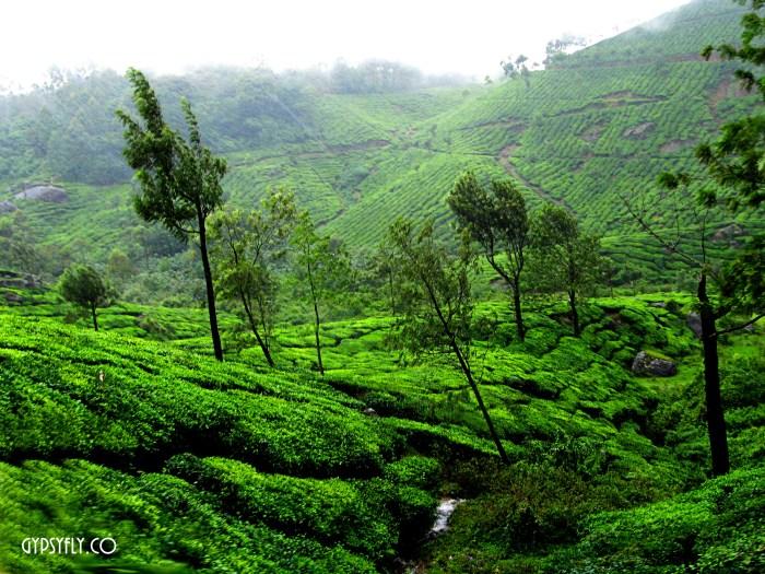 Rains, Breeze & Tea | Munnar, Kerala