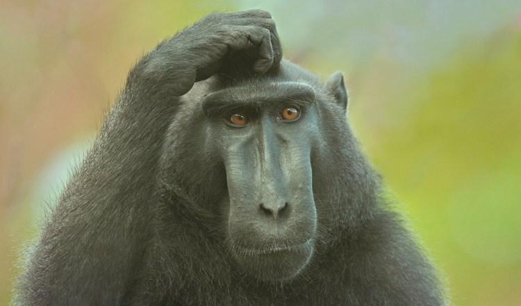 pensar-mono-evolucion-tiempo-planetas-hablando-en-libre-2