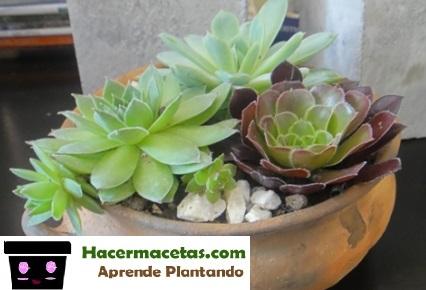 plantas suculentas en maceta de barro