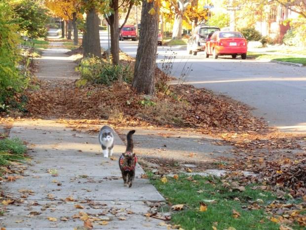 sherlock-hopeless-cat-detective