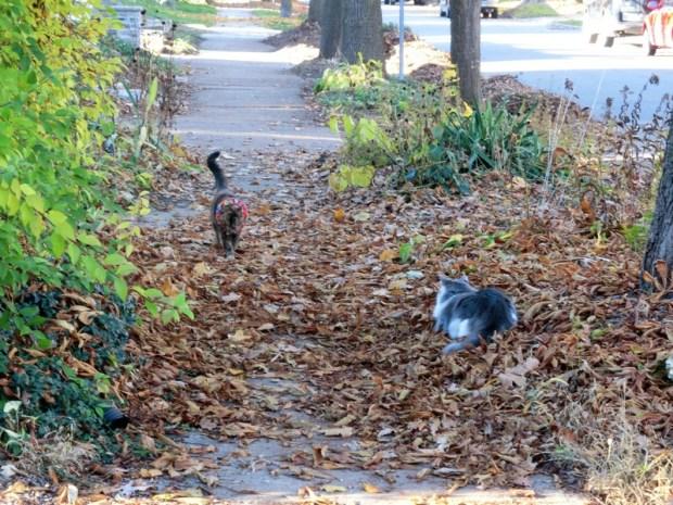 patroling-the-streets-sidewalks-pet-detective