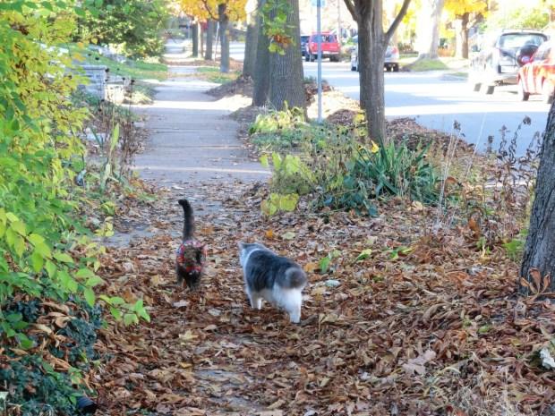 sidewalk-confrontation