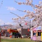 【5/10】もりまち桜まつり歌謡ショー(森町)