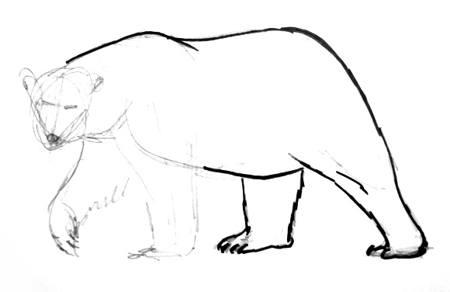 Поэтапное рисование полярного медведя