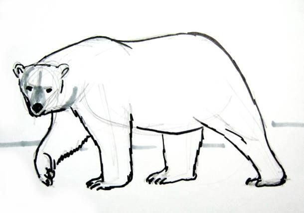 Полярный белый медведь рисунок