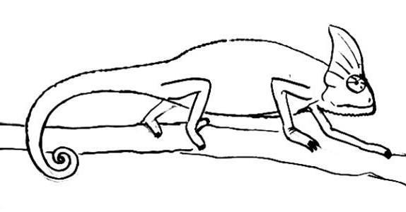 Рисунок Хамелеон 49