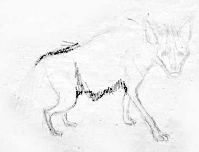 Поэтапный рисунок Гиены 5