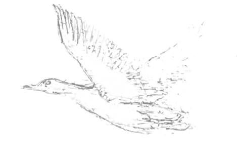 Рисуем летящую утку