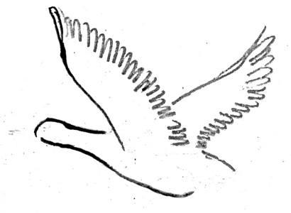 Утка летит рисунок
