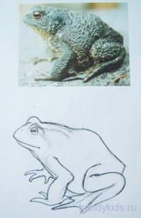 Нарисуем жабу
