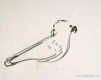 Как нарисовать какаду