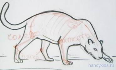 Строение туловища ягуара