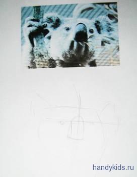 Рисуем голову коалы