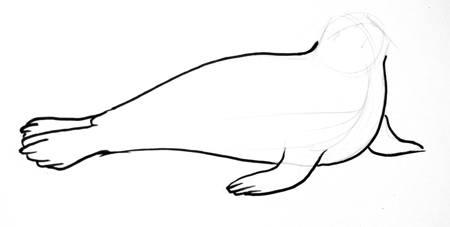 Рисуем тюленя поэтапно