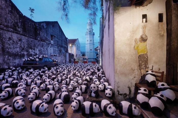 pandas in penang