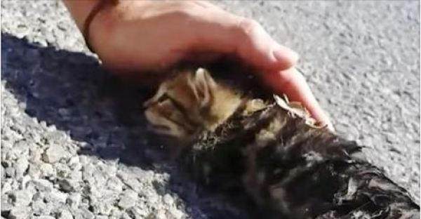 With only a little bit of petting and great love, this street kitten's life was changed scientifically in better forever!
