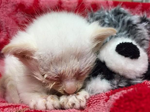 1-Tiny-Kitten-Rescued