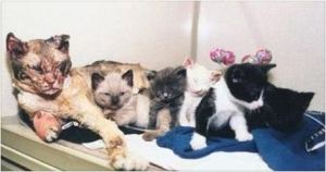 Her 5 Kittens Were Trapped In A Burning Building. But Then This Cat Did Something ASTONISHING.