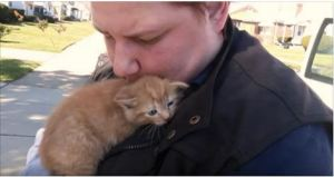Mama Cat And Two Kitties Rescued After Being Thrown Out A Car Window