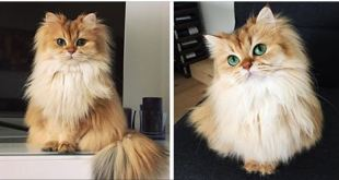 People Say This Is The Most Photogenic Cat In The World… And They Are So, So Right!