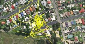 She Let Her Cat Out With A GPS Tracker… When She Saw What He Secretly Does It Left Her Stunned.