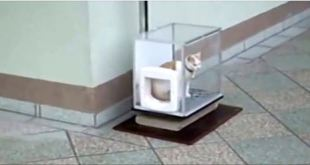 This Curious Cat Climbs Into A Glass Box. Seconds Later, My Jaw Dropped! WHOA!